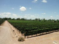 Mendoza – Argentina's wine capital