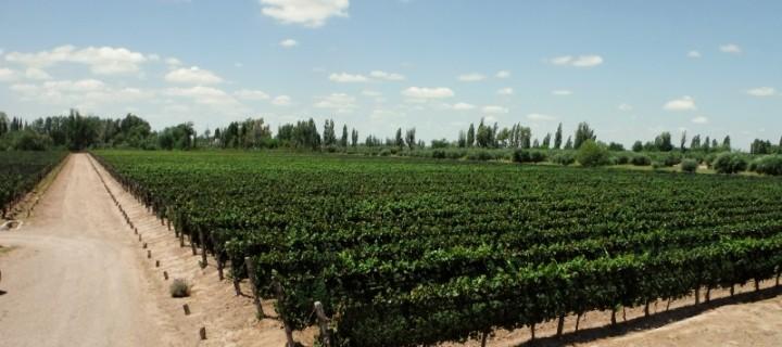 Mendoza – Argentina's wine capital