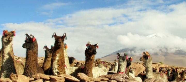 South Bolivia and the Salar de Uyuni