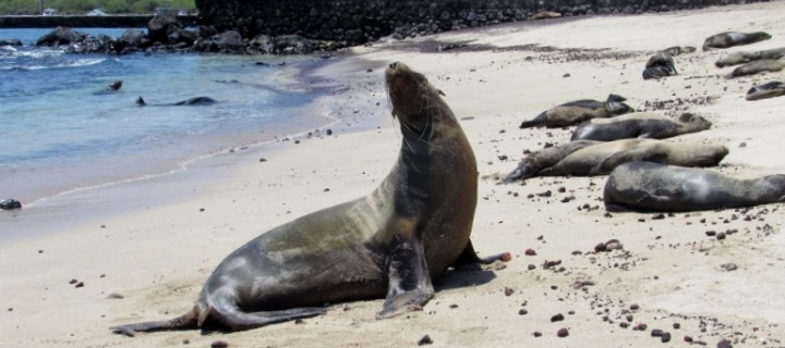 Our amazing trip in the Galápagos Islands
